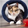 Cat Health   30 Most Common Categories   RightPet