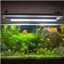 Fish Health and Wellness   10 Most Common Conditions   RightPet