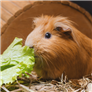 Small / Exotic Mammal Vegetables   Top 10 Rated Treatments   RightPet