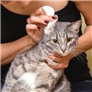 Cat Natural Health Products | Top 10 Rated Treatments | RightPet