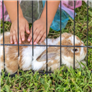 Small / Exotic Mammal Health   Top Owner Rated Treatments   RightPet