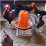Livestock / Poultry Lifestyle products   Top 10 Rated   RightPet